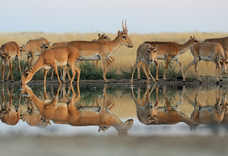 Калмыкию посетят инвесторы с целью ознакомления с ресурсами в области экотуризма