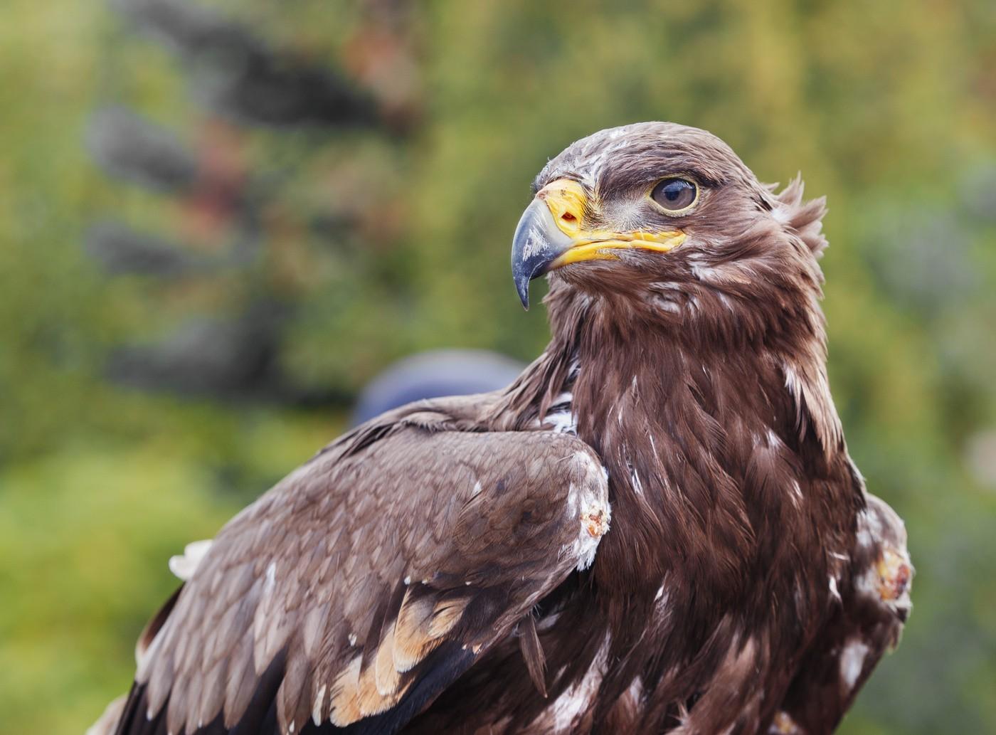 В Государственном заповеднике «Черные Земли» началось кольцевание птиц