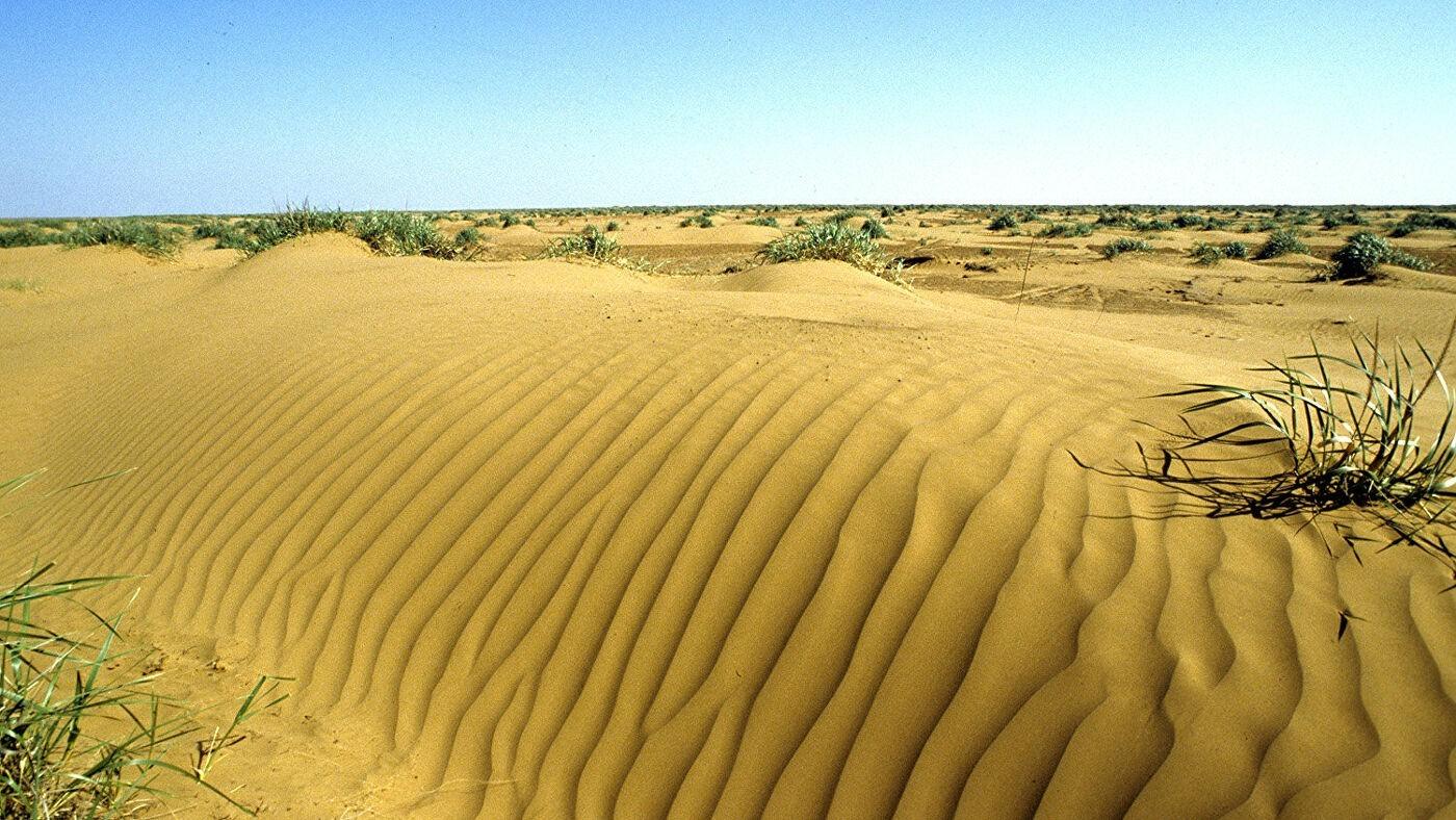 Борьбой с опустыниванием земель займется специализированный Центр