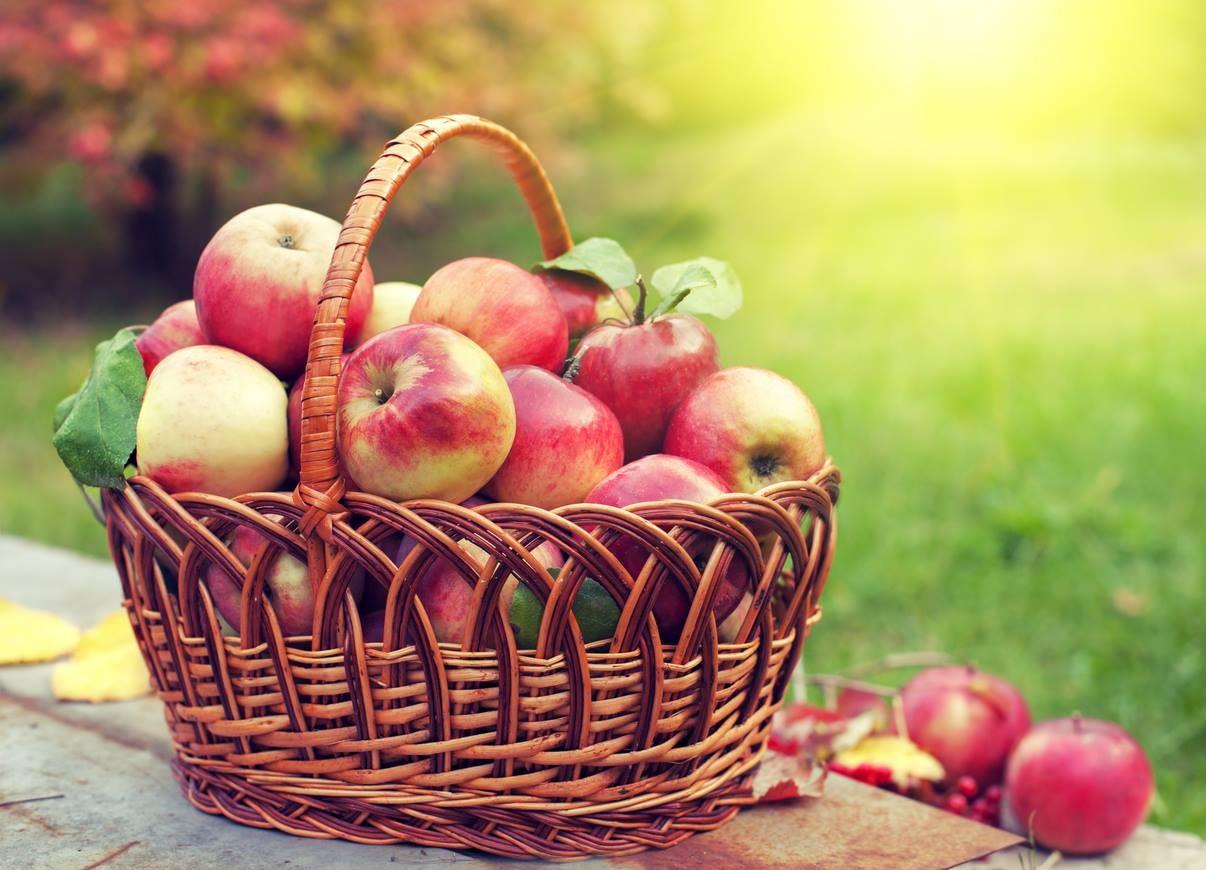 Яблочный спас - символ окончания лета и наступления осени