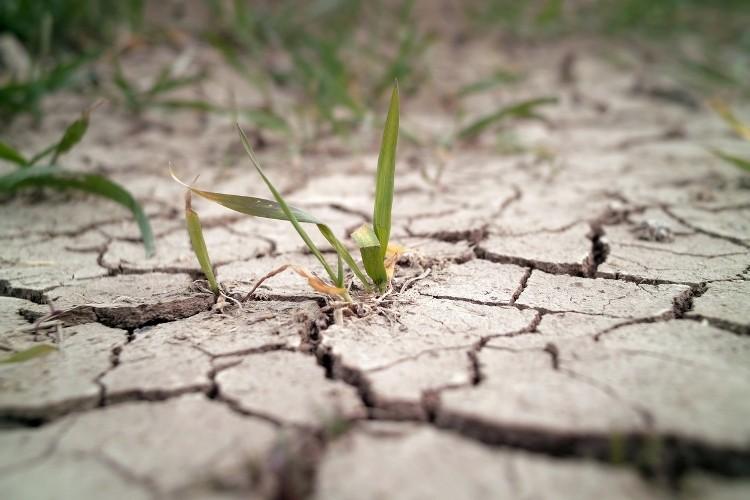 В Калмыкии появится Центр по борьбе с опустыниванием земель