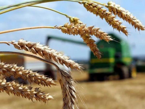 Аграрии Калмыкии отметили профессиональный праздник