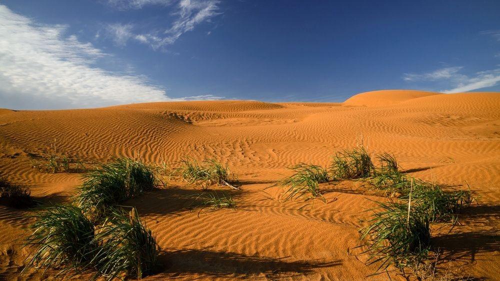 Сегодня в мире отмечают День борьбы с опустыниванием и засухой
