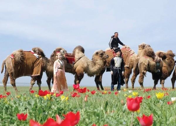 На Фестивале тюльпанов будет организовано дежурство экологических патрулей