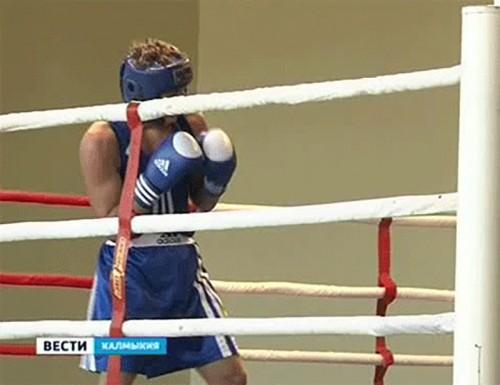 Три калмыцких боксера стали победителями Всероссийского турнира памяти Ц.Балзанова