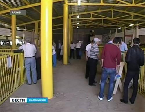 Выставочный павильон племзавода заметно улучшил условия содержания скота