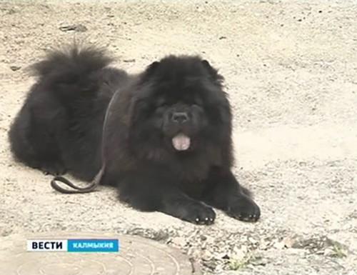 В Элисте открылся клуб любителей животных