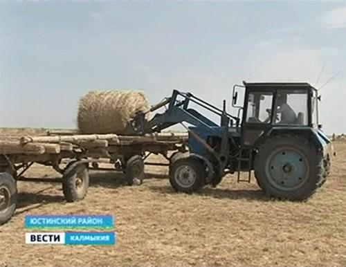 В Калмыкии начинается заготовка сена