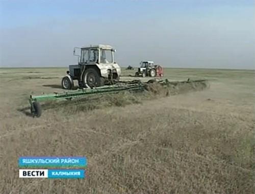 """Племзавод """"Улан-Хееч"""" планирует заготовить 3000 тонн грубых кормов"""