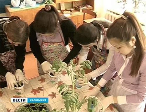 В Калмыкии будет трудоустроено около 2000 подростков
