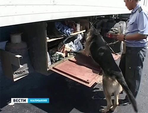 Уровень наркопреступности в Калмыкии в 1, 5 раза превышает среднероссийский показатель