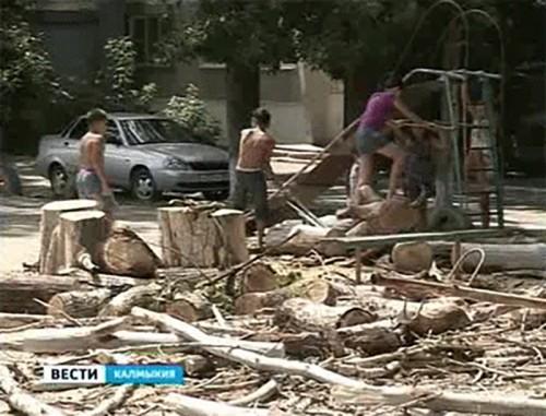 В Элисте огромное дерево упало на игровую площадку