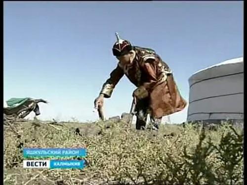 Монгольские семьи будут разводить в Калмыкии верблюдов и лошадей по национальным традициям