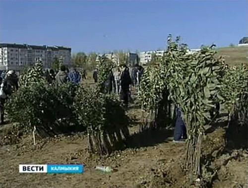 На востоке Элисты разбит фруктовый сад