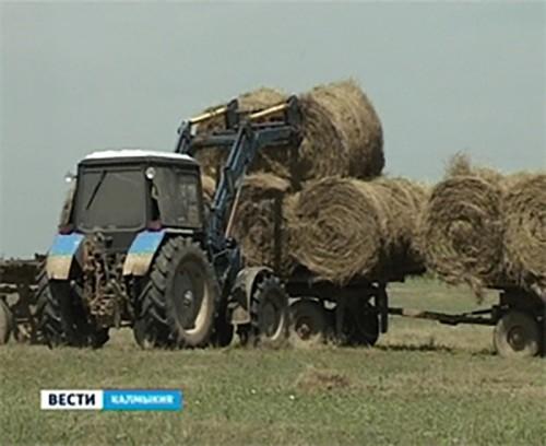 В Калмыкии заготовлено 87% грубых кормов