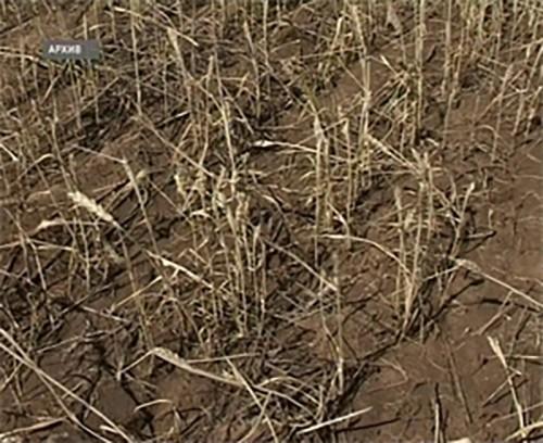Более 173 млн. рублей получили сельхозтоваропроизводители Калмыкии, пострадавшие от засухи