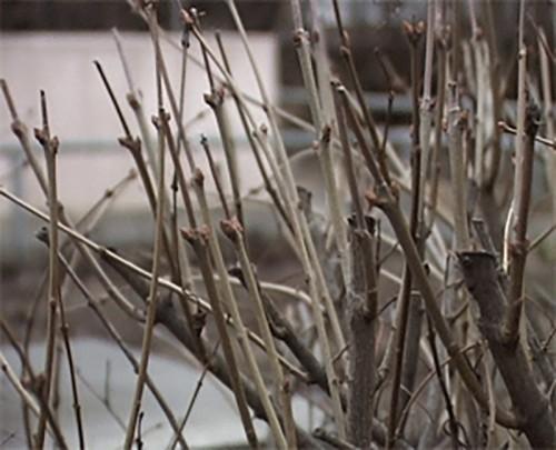 В Калмыкии побит температурный рекорд
