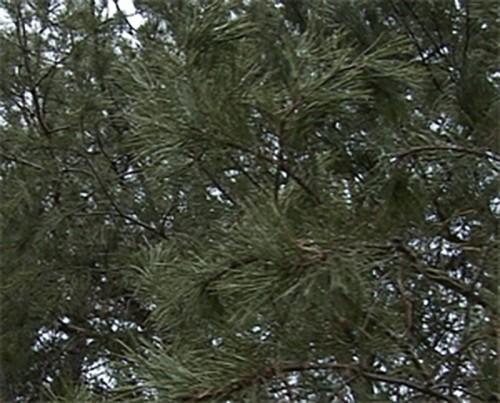 """В Калмыкии будет создан проект """"Развитие лесного хозяйства на 2013-2020 годы"""""""