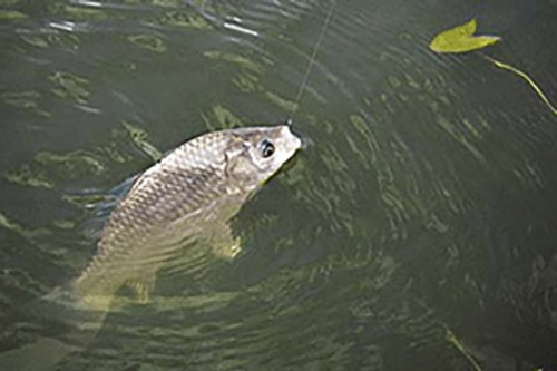 Весенняя путина: особых ограничений для калмыцких рыбаков нет