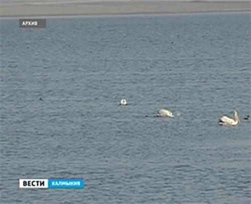 В Калмыкии запрещена весенняя охота на водоплавающую дичь