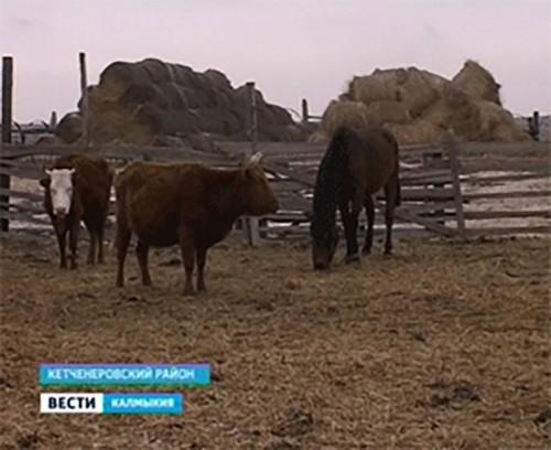 КФХ Калмыкии будет предоставлен ряд льгот