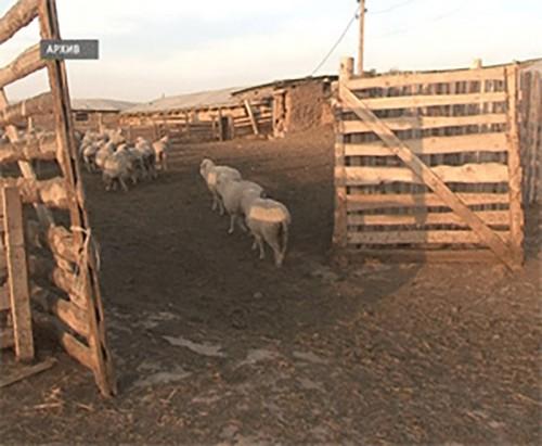 В Лаганском районе за долги арестовали животноводческую стоянку