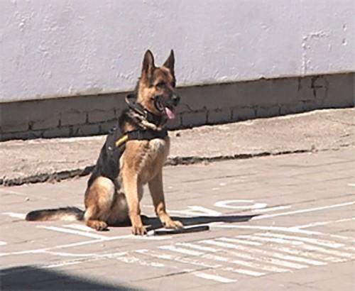 Калмыцким школьникам продемонстрировали чудеса дрессировки собак