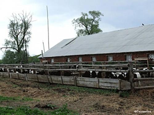В Калмыкии развитие семейных животноводческих ферм поддержат грантами