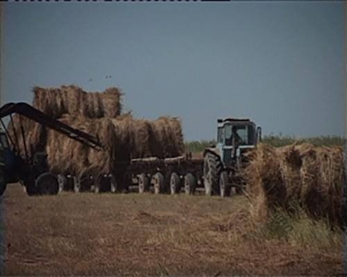 Хозяйства Калмыкии обеспечены кормами на 86%