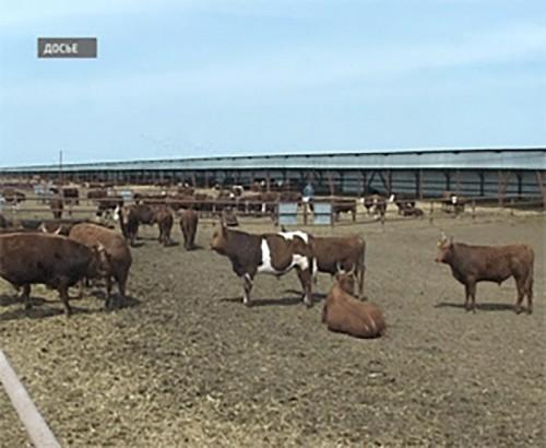 В Элисте проходит IV съезд Национальной ассоциации заводчиков калмыцкого скота