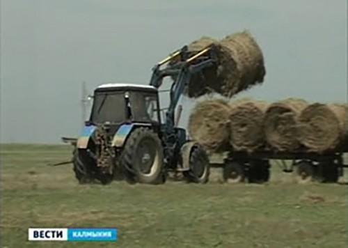 Заготовка кормов в Калмыкии идёт полным ходом