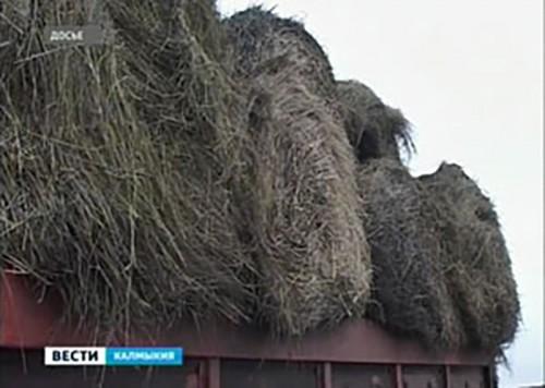 Судебные приставы Калмыкии наложили арест на 1 тысячу рулонов сена СПК «Гашун» за долги
