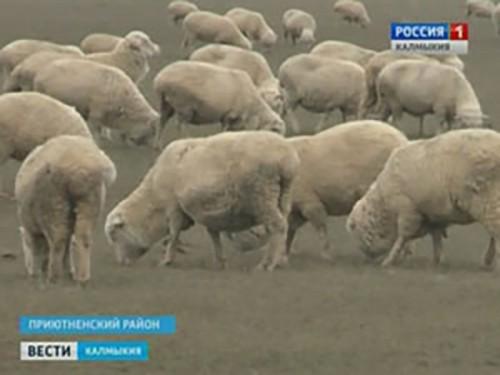 Погодные условия в Калмыкии оптимальны для проведения зимовки