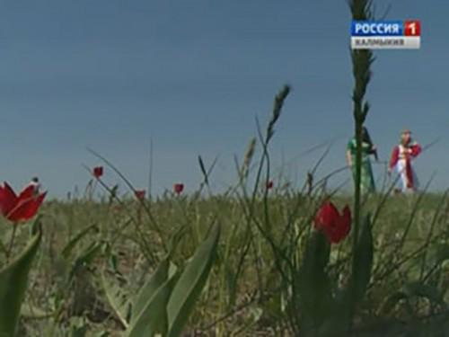 В Калмыкии с успехом завершился фестиваль тюльпанов