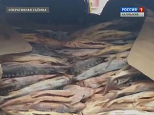 В Калмыкии задержана крупная партия рыбы осетровых пород