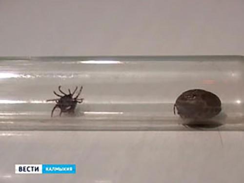 В Калмыкии регистрируется высокий уровень активности клещей
