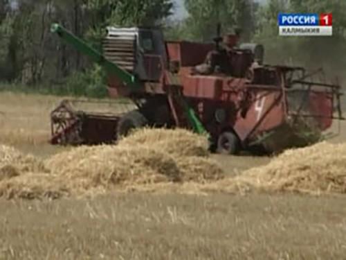 Северные районы Калмыкии подверглись засухе