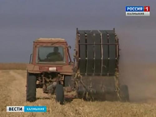 От почвенной засухи пострадали 49 сельхозтоваропроизводителей