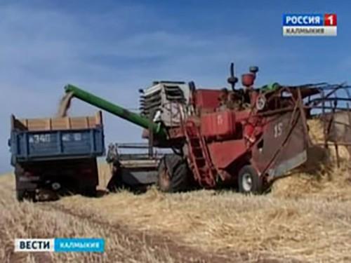В Калмыкии ведут заготовку грубых кормов