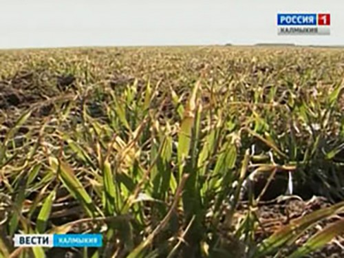Калмыкия получит федеральную субсидию в 19 млн. рублей