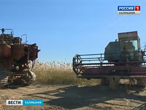 Хозяйства Октябрьского района республики завершают уборку риса