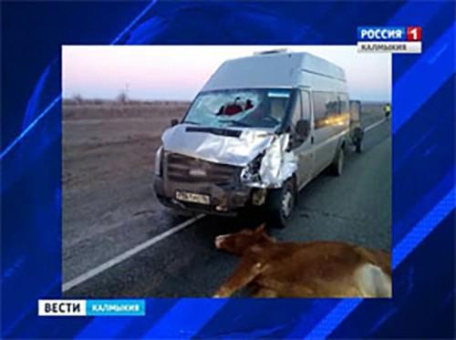 В Калмыкии зарегистрированы наезды на лошадей и овец