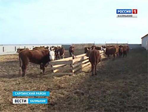 В Калмыкии готовятся к расплодной кампании
