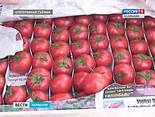 Специалисты Россельхознадзора пресекли ввоз партии зараженных томатов