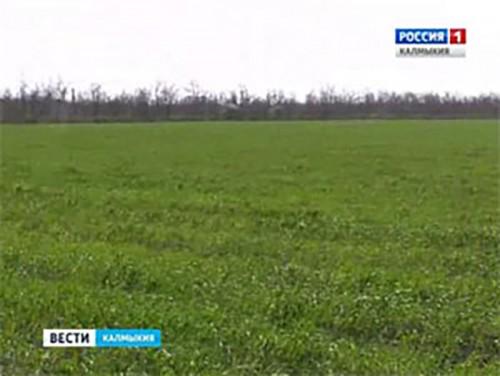 Правительство России распределило субсидии на развитие мелиорации