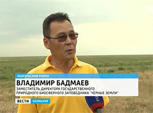 В государственном биосферном заповеднике завершился отел сайгаков