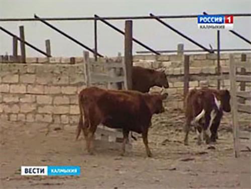 В Элисте прошло заседание коллегии министерства сельского хозяйства Калмыкии