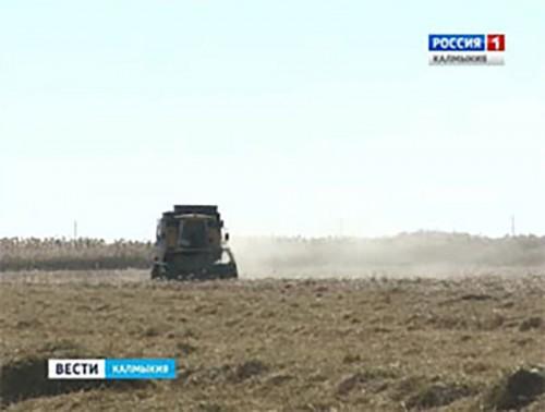 В Калмыкии началась уборка риса