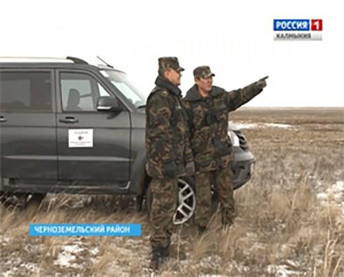 В Калмыкии ожидают увеличение популяции сайгаков