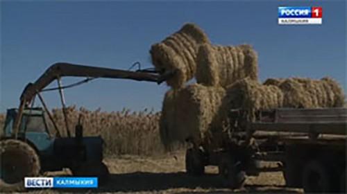 Наложен арест на 1 тонну сена
